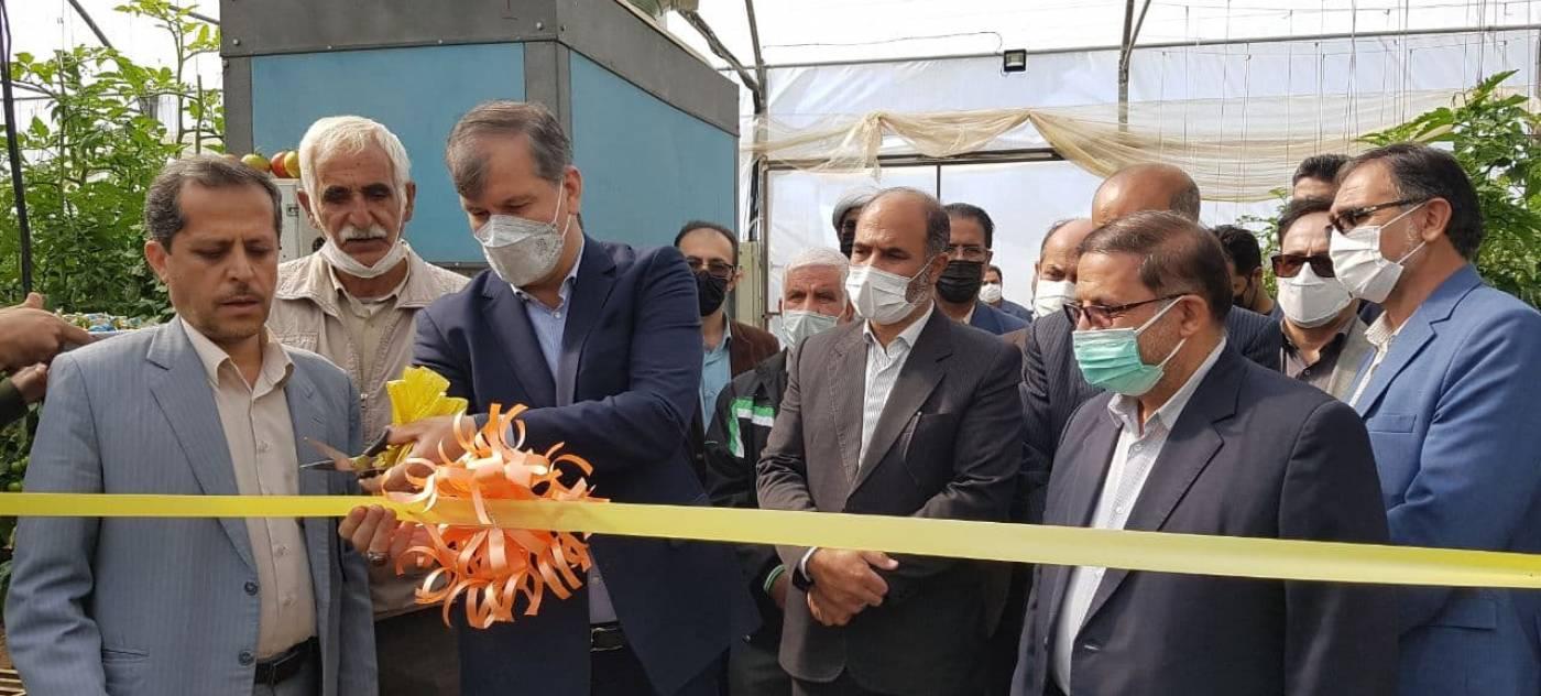 افتتاح گلخانه محمد ظاهری در شهر فرسفج با حضور معاون وزیر جهاد کشاورزی